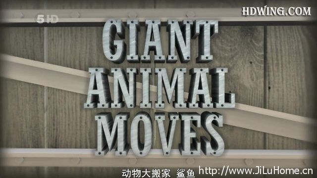 动物大搬家 Animal Megamoves》
