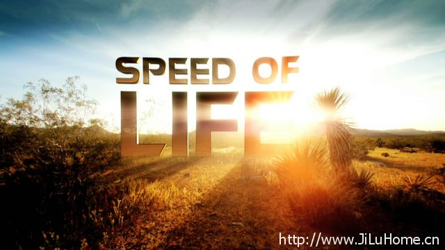 《生命的速度 Speed of Life》