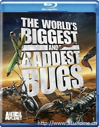 《虫霸天下 The world's biggest and badest bugs》