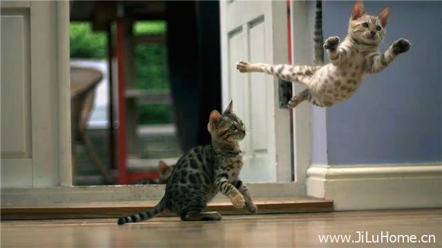 《宠物的天性 Pets Wild At Heart》