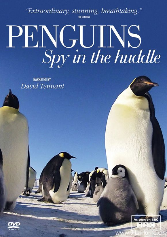《卧底企鹅帮 Penguins Spy in the Huddle》