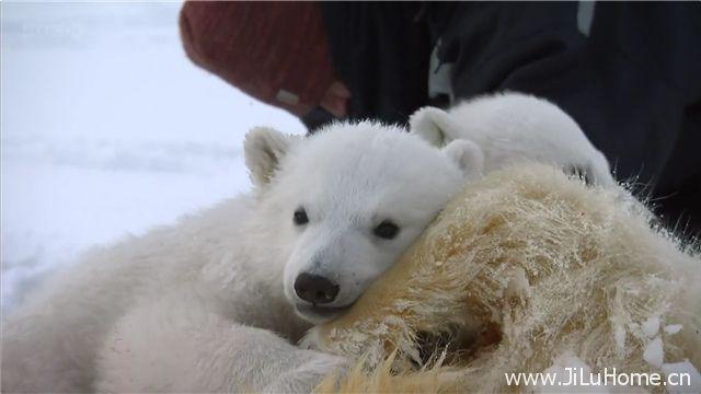 《我和北极熊一家 The Polar Bear Family And Me》