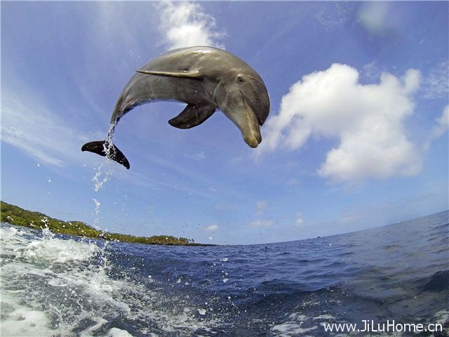 《卧底海豚帮 Dolphins Spy In The Pod》