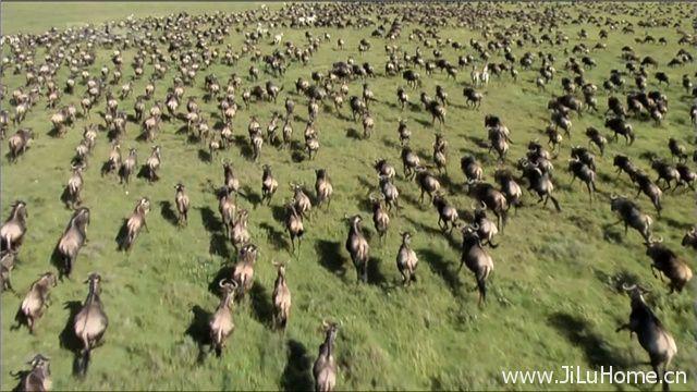 《大迁徙:角马群里的间谍 Trek Spy On The Wildebeest》