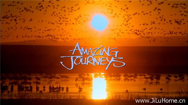 《惊异之旅 Amazing Journeys》