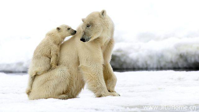 《雪地宝宝 Snow Babies》