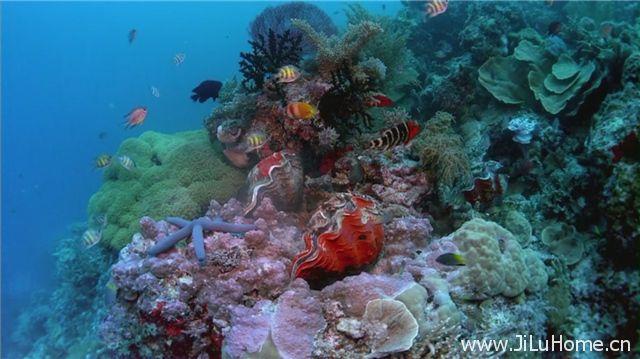 《生命的海洋 The Living Sea》