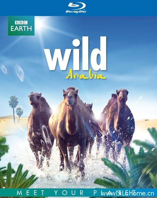 《狂野阿拉伯 Wild Arabia》