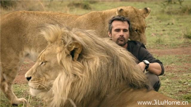 《猫科动物:奇妙的动物家族 Big Cats: An Amazing Animal Family》