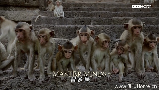 《猴子大观 Monkeys Revealed》