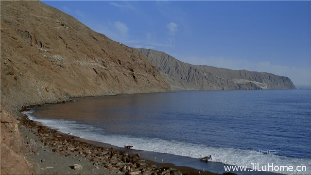 《深海绿洲 Ocean Oasis》