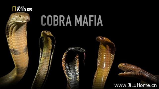 《黑手党眼镜蛇 Cobra Mafia》