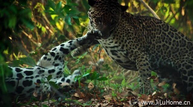 《野性巴西/狂野巴西 Wild Untamed Brazil》