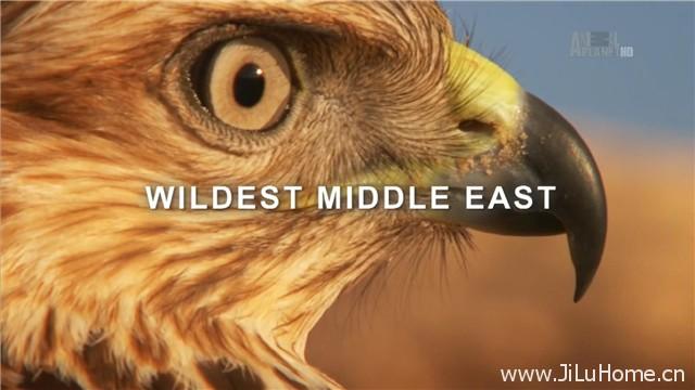 《中东野生大地 Wildest Middle East (2012)》