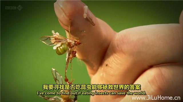 《吃昆虫能拯救世界吗? Can Eating Insects Save the World? (2013)》
