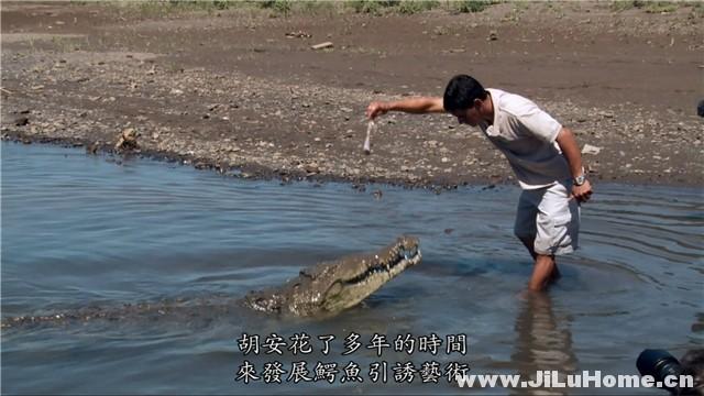 《鳄鱼盛宴 Dragon's Feast (2013)》