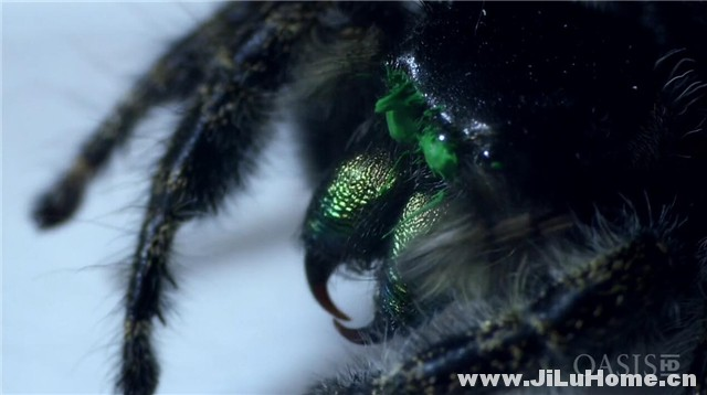 《超级蜘蛛 Super Spider (2011)》