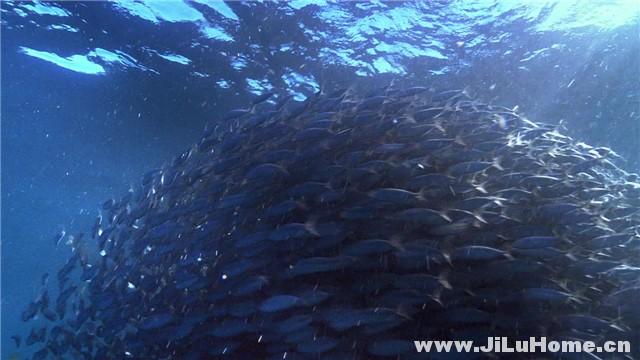 《狂野之海/海洋世界 Wild Ocean (2008)》
