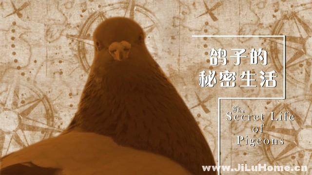 《鸽子的秘密生活 The Secret Life of Pigeons》