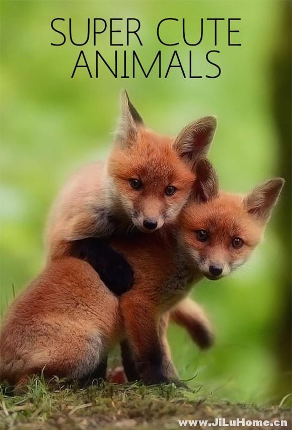 《超萌动物 Super Cute Animals (2015)》