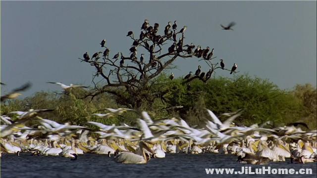 《迁徙的鸟 Le peuple migrateur (2001)》