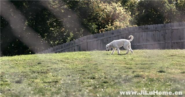 爱犬情深 Dogs (2018)》第一季