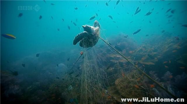 《海洋之死 Death of the Oceans (2010)》