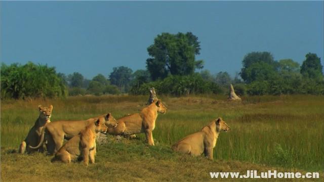 《最后的狮子 The Last Lions (2011)》