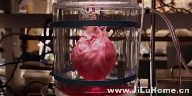 《如何制造心脏 How to Build a Beating Heart (2011)》