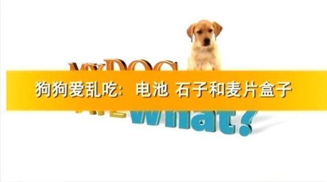 《狗狗爱乱吃 My Dog Ate What》