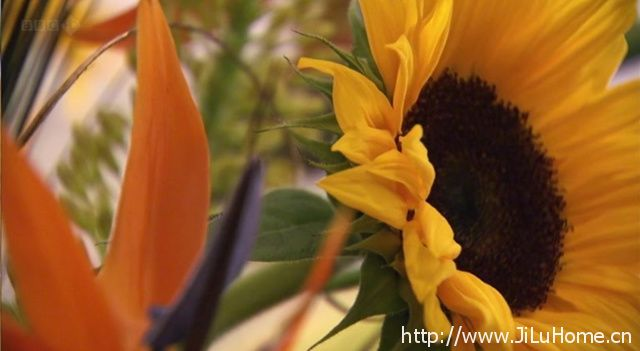 《蜜蜂蝴蝶与花 Bees Butterflies and Blooms》