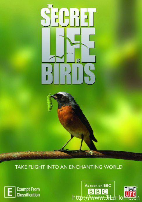 《鸟类秘闻/鸟类的秘密生活 The Secret Life Of Birds》