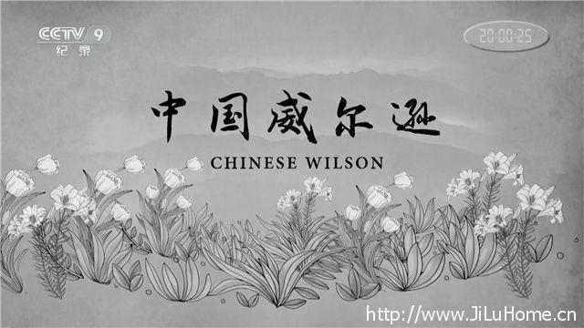 《中国威尔逊 Chinese Wilson》
