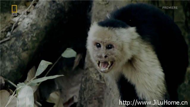 《被猴群扶养的女孩 Woman Raised By Monkeys》