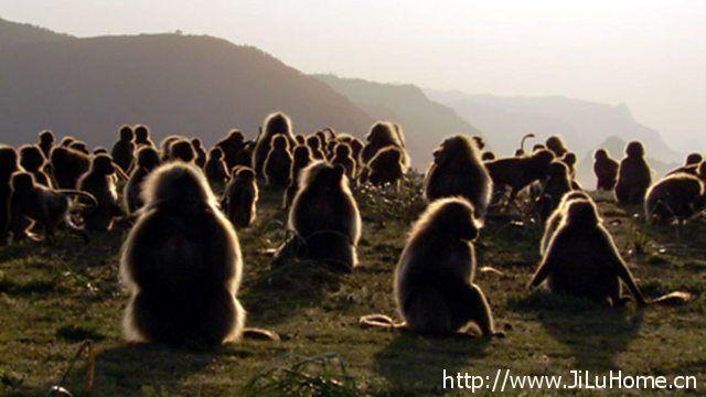 《大裂谷:非洲之心 The Great Rift Africas Wild Heart》