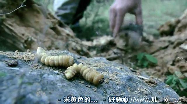 《生者为王 Get Out Alive with Bear Grylls》