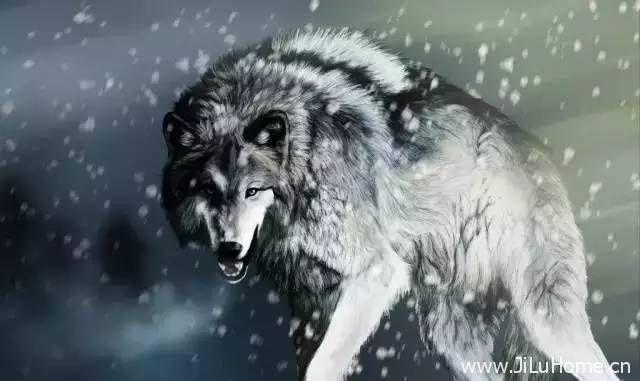 《狼 Wolves 1999》