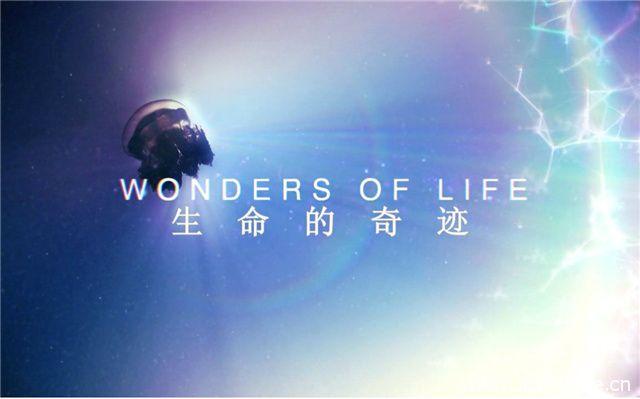 《生命的奇迹 Wonders Of Life》
