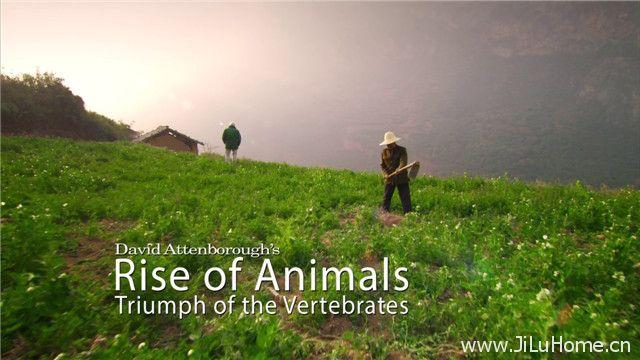 《动物的崛起 Rise Of Animals Triumph Of The Vertebrates》
