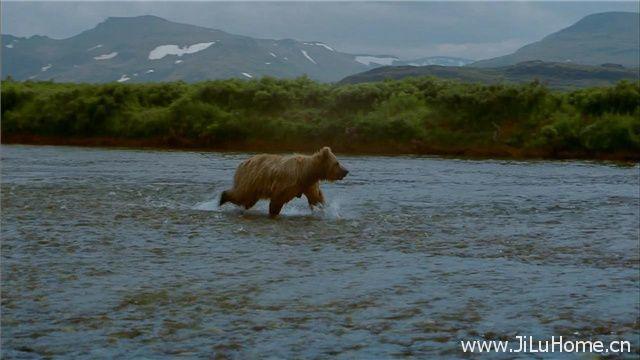 《熊 Bears》
