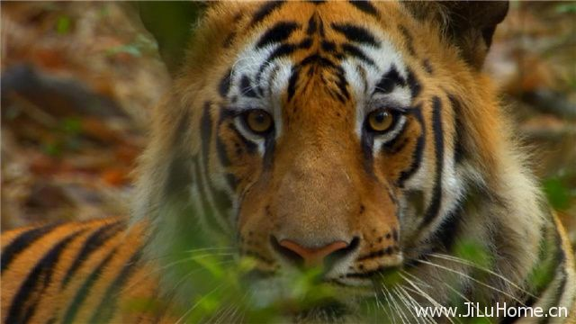《探秘野性印度 Secrets Of Wild India》