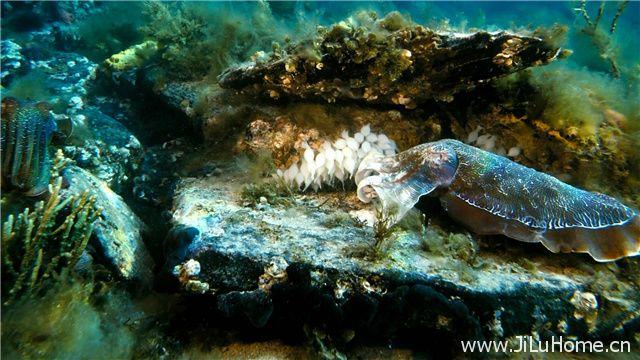 《深海猎奇/深深的海洋/深海探宝 Deep Sea》