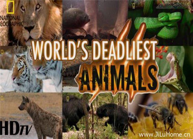 《致命的动物 Deadly Animals》