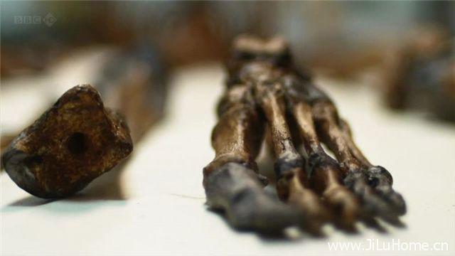 《解剖史前古尸 Prehistoric Autopsy》