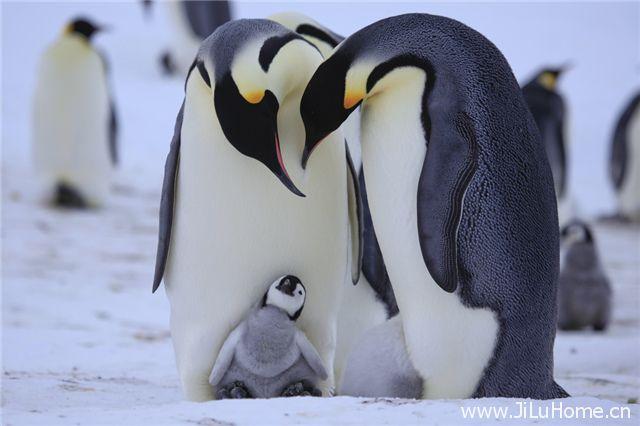 《卧底企鹅帮 Penguins Spy in the Huddle》