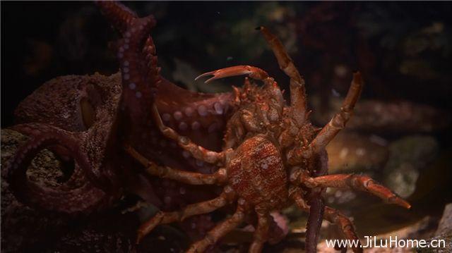 《生命的起源 Ocean Origins》