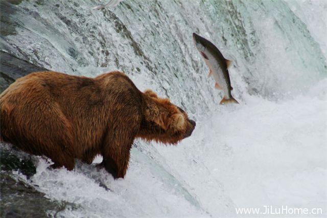 《国家公园:美国最佳创意 The National Parks America's Best Idea》