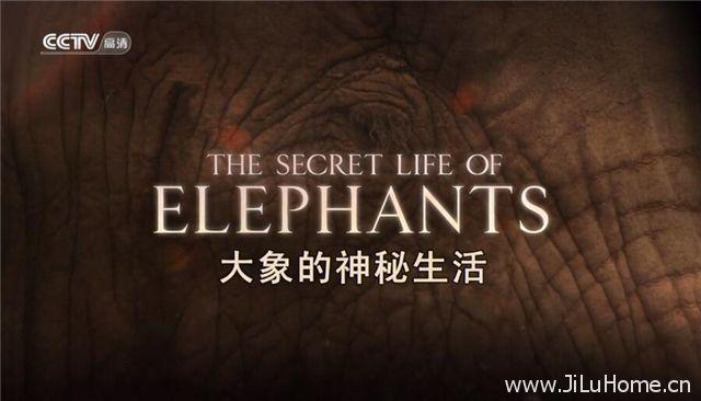 《大象的神秘生活 The Secret Life Of Elephants》