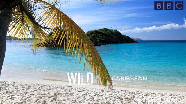 《野性加勒比 Wild Caribbean》