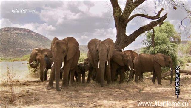 《大象的神秘生活 The Secret Life Of Elephants》